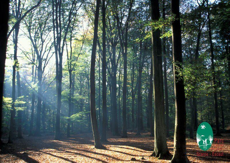 Parc_naturel_scarpe_escaut_nature_arbres_fleurs_paysage_naturel